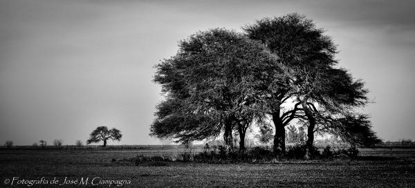 Los árboles del Campo