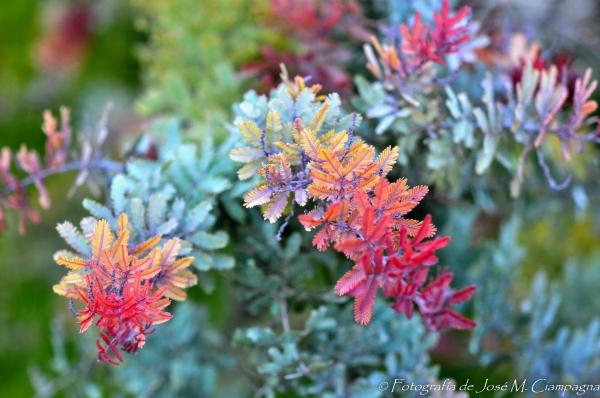 Flores en Mar de las Pampas