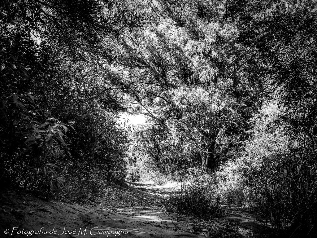 Recuerdos de tinta china en una fotografía de un paisaje de Campo
