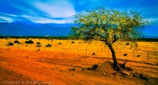 Camino Cafayate-Salta, Argentina