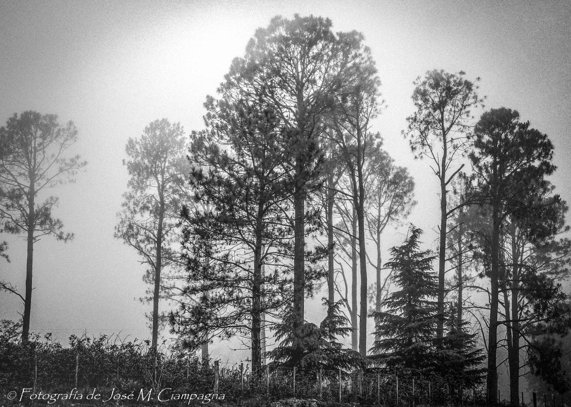 Niebla con pinos en Calamuchita, Córdoba, Argentina