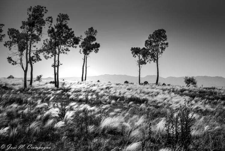 Sierras de Córdoba en blanco y negro foto 3