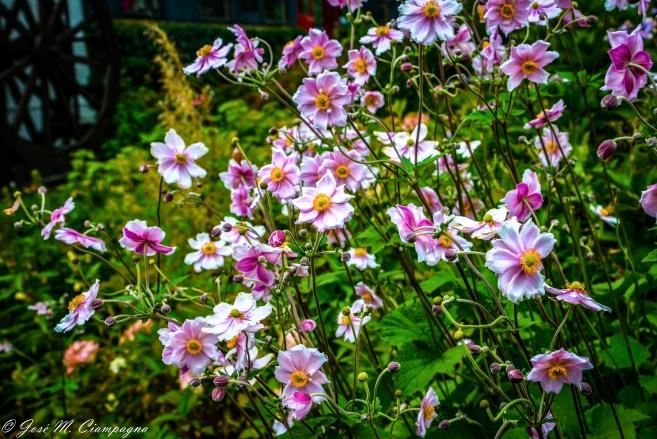 Flores de Avoca  foto uno