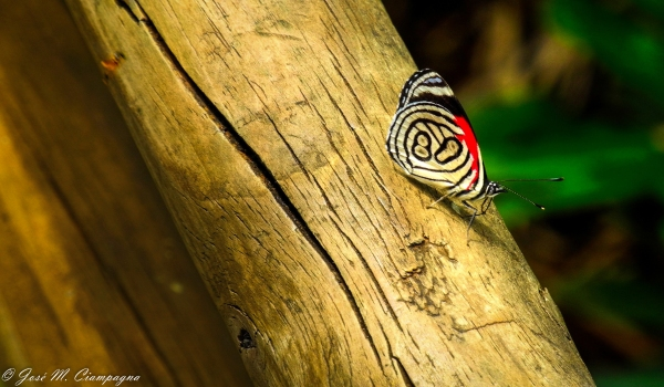 Mariposa cataratas