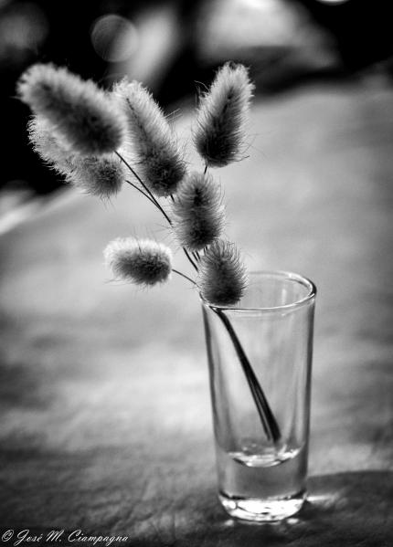 Bodegón en blanco y negro