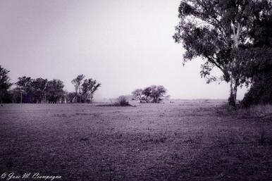 Foto Campo cuatro
