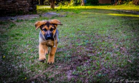 Cachorro de policía foto uno