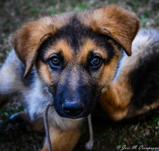 Cachorro de policía foto dos