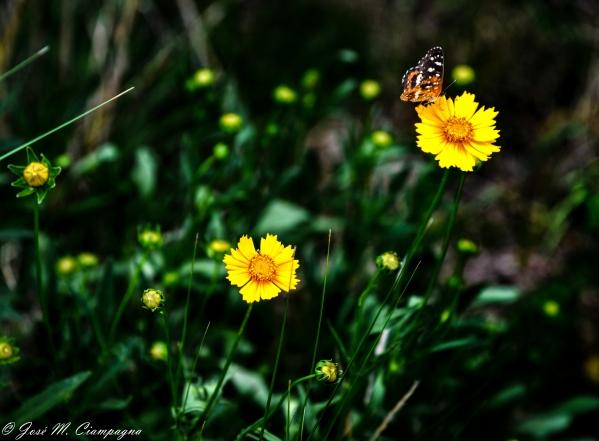 Mariposas foto 1