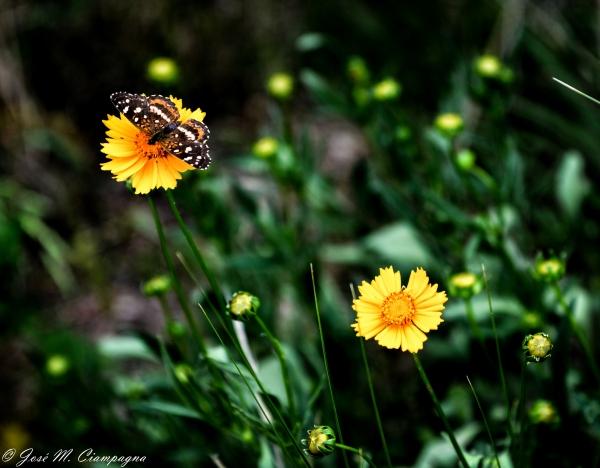 Mariposas foto 2