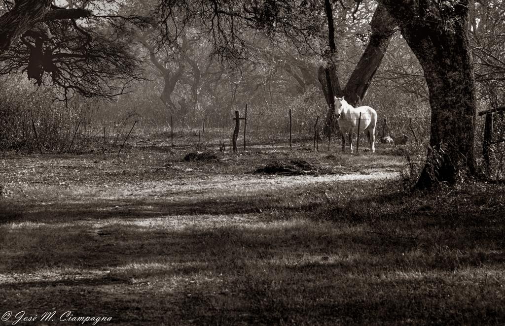El caballo blanco, Ea. San Teodoro, Río Primero, Córdoba, Argentina