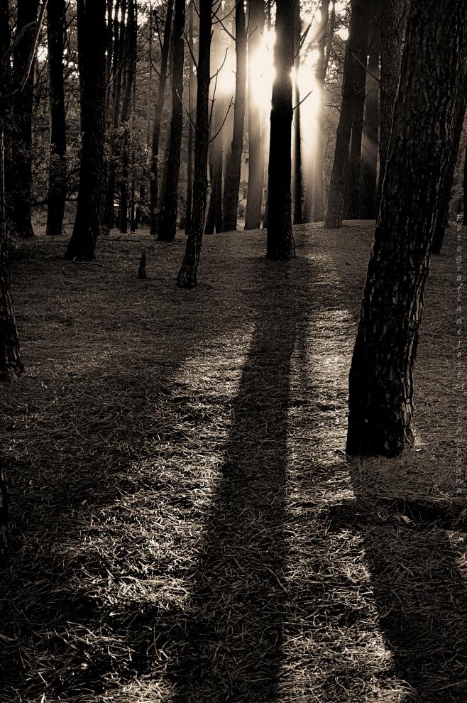 Luces del bosque