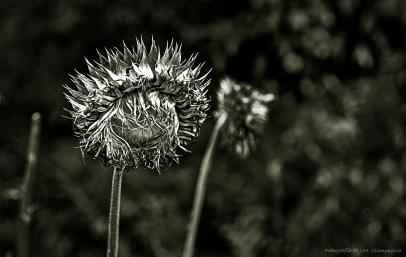 La flor seca