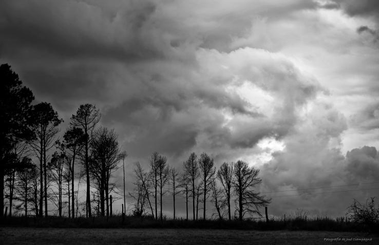 La tormenta tras los pinos
