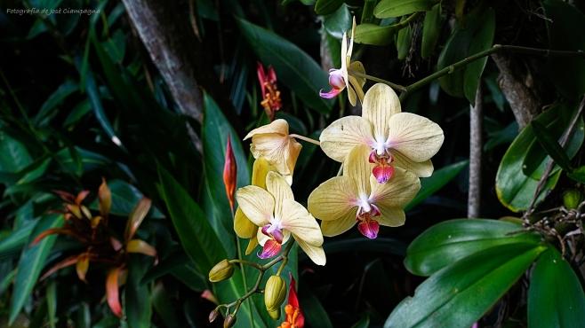 Colores de Costa Rica 2