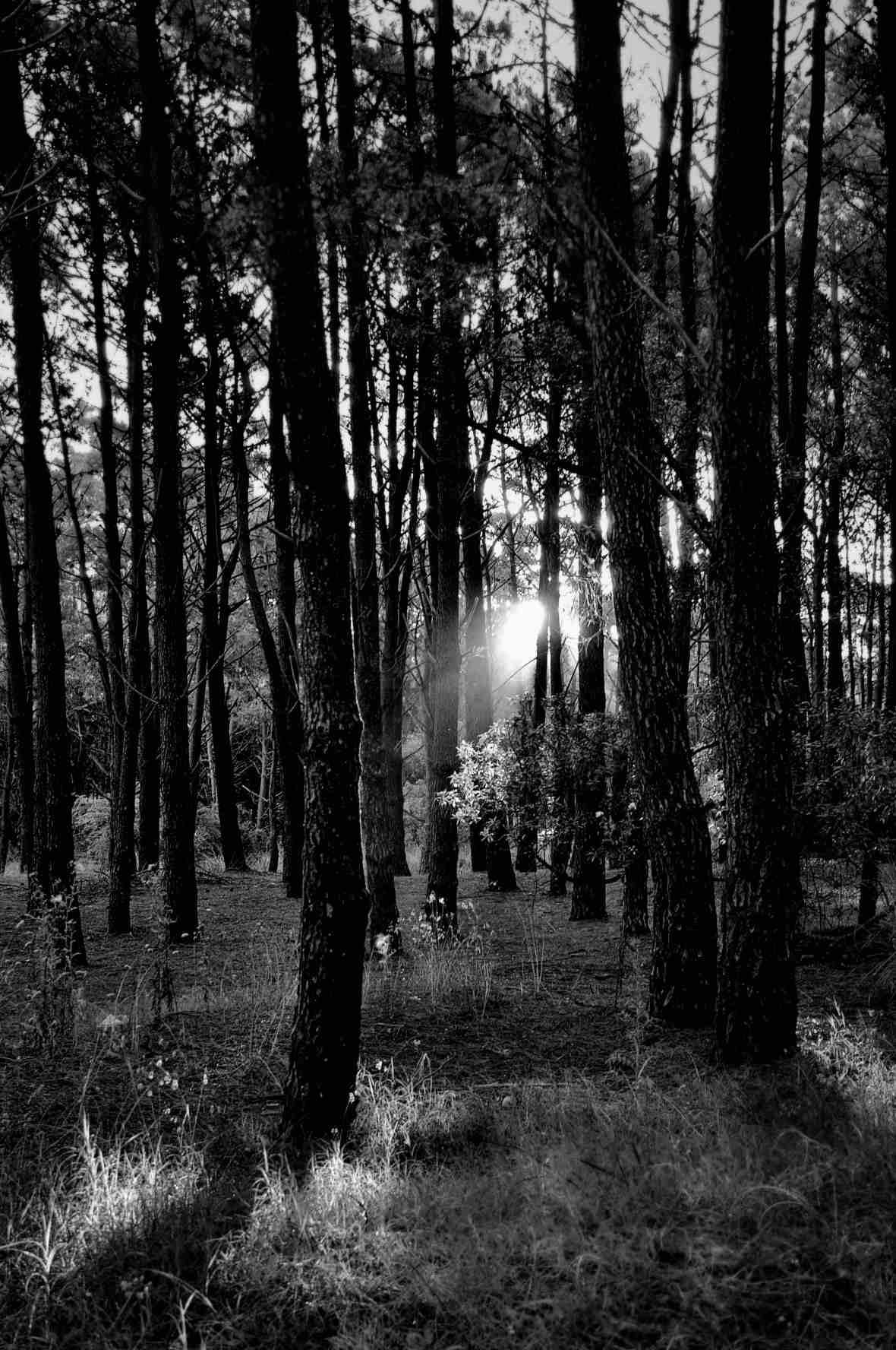 """""""Las últimas luces del bosque"""", Mar de las Pampas, Provincia de Buenos Aires. Enero 2012."""