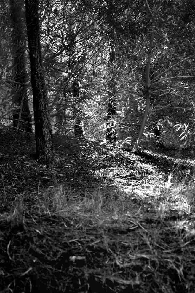 """""""Las últimas luces del bosque toma II"""", Mar de las Pampas, Provincia de Buenos Aires. Enero 2012."""