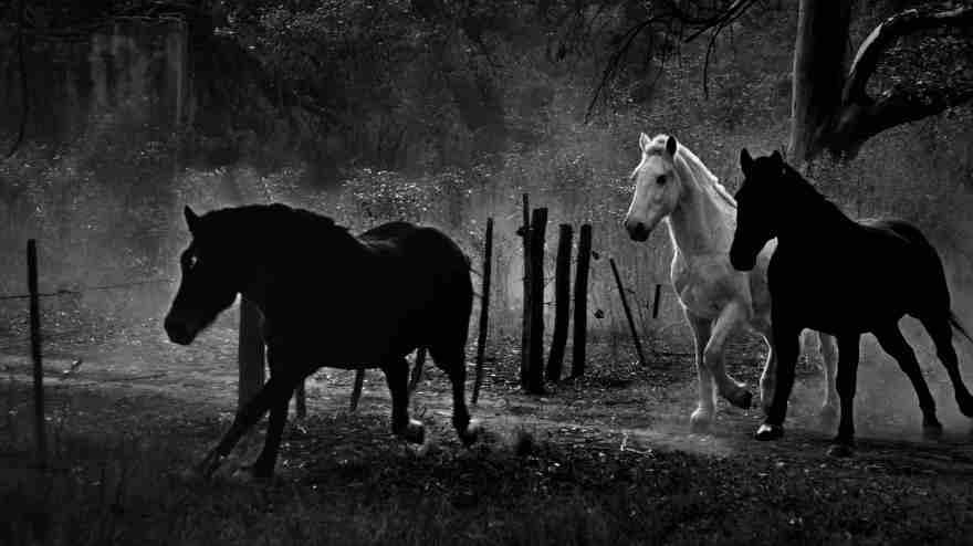 """""""Corrida de caballos en San Teodoro"""", Río Primero, Córdoba, Argentina"""