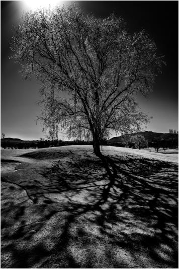 El árbol del Valle del Golf 2