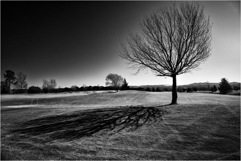 El árbol del Valle del Golf