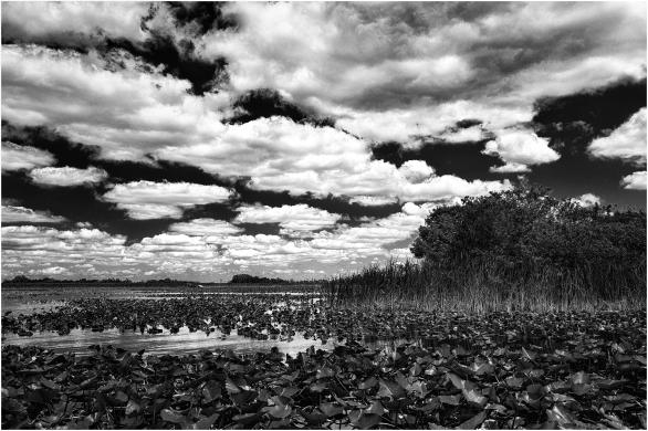 Everglades. Florida. USA. toma dos