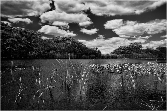 Everglades. Florida. USA. toma uno