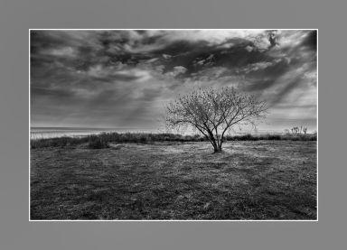 Luces del árbol de Ansenuza