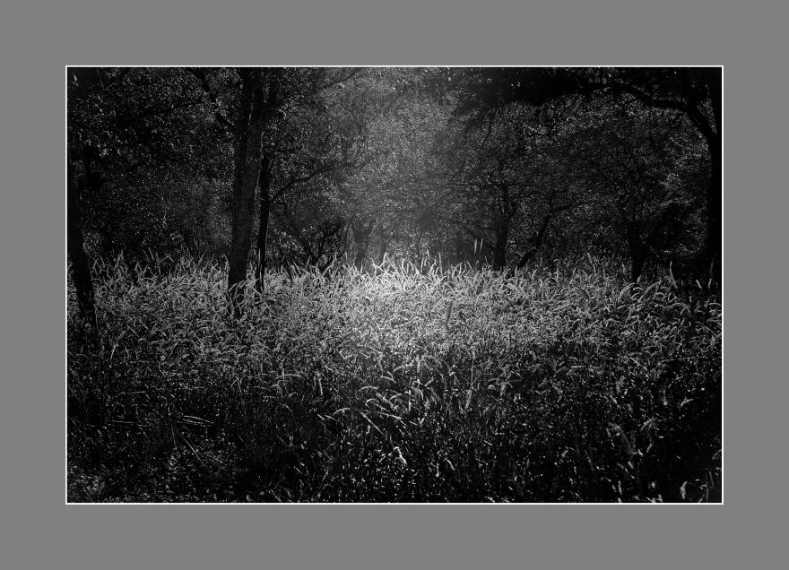 Luces del Bosque. Complejo el 44, Valle de Punilla, Córdoba, Argentina.