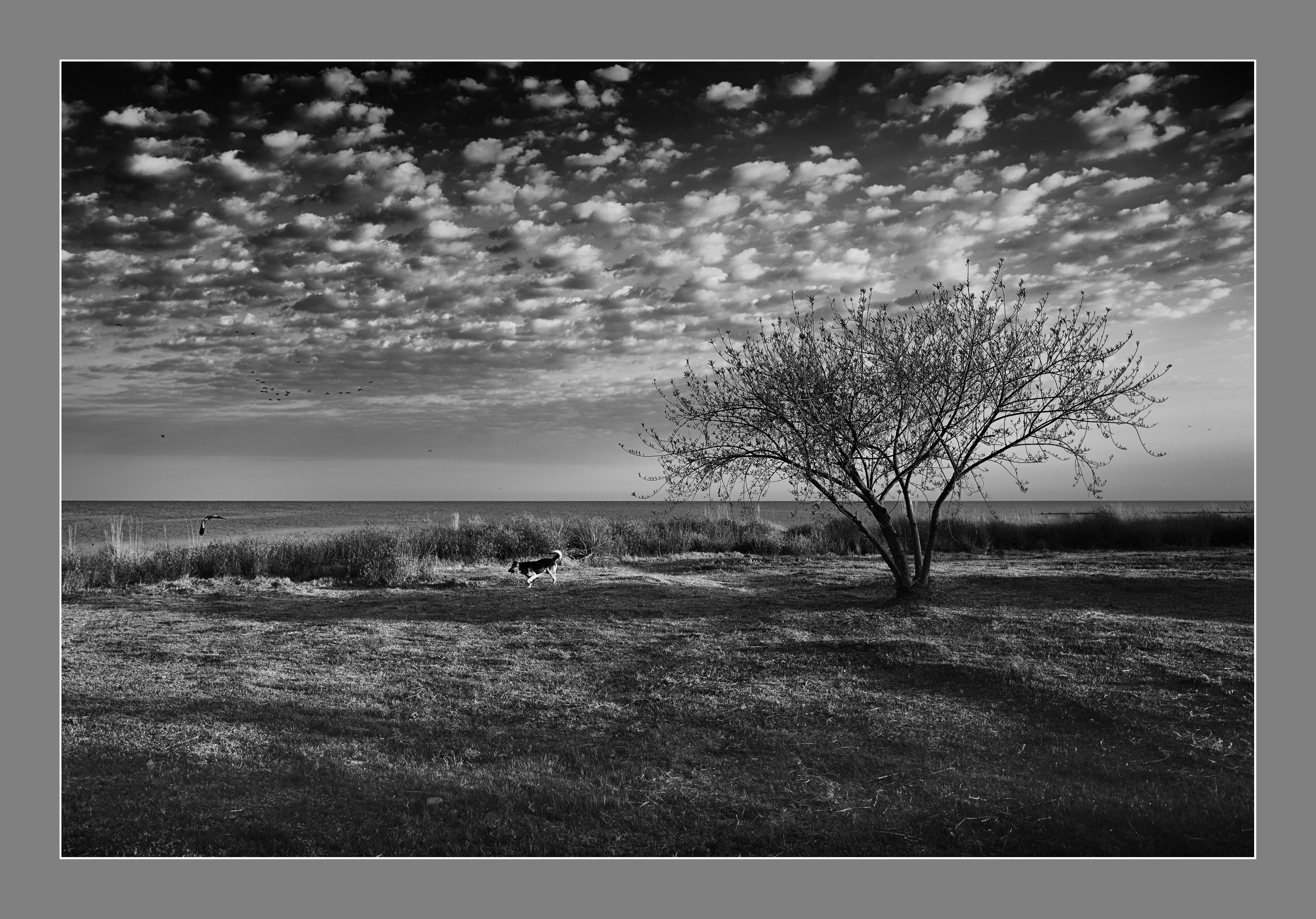 El árbol, el perro y el ave. Mar de Ansenuza, Miramar, Córdoba, Argentina