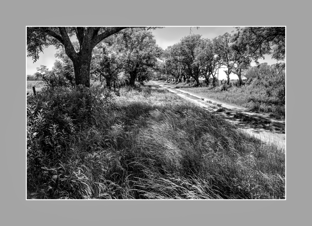 """""""El camino interno de entrada"""", Ea. San Teodoro, zona rural de Río Primero, Córdoba, Argentina. Diciembre 2016."""