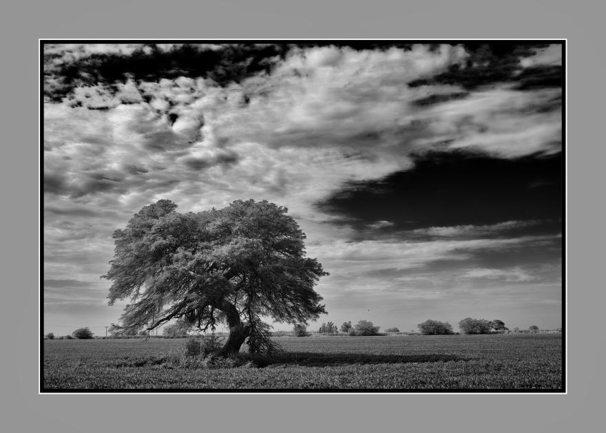 El árbol con sombra