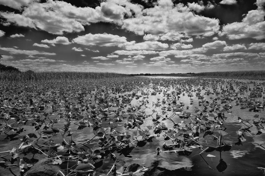 Everglades toma II