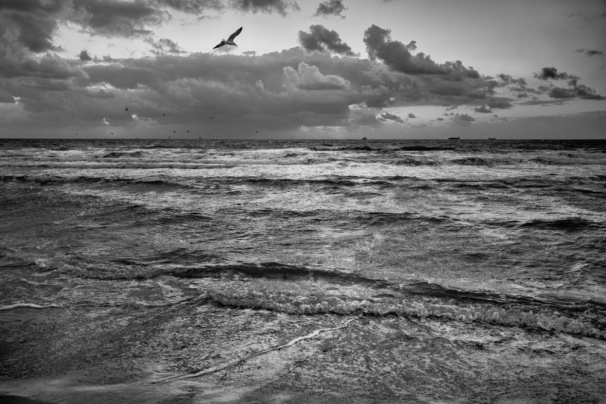 La gaviota sobre la mar