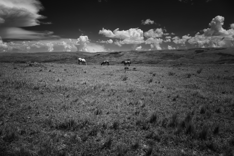 Tres caballos en los pastos de Yacanto