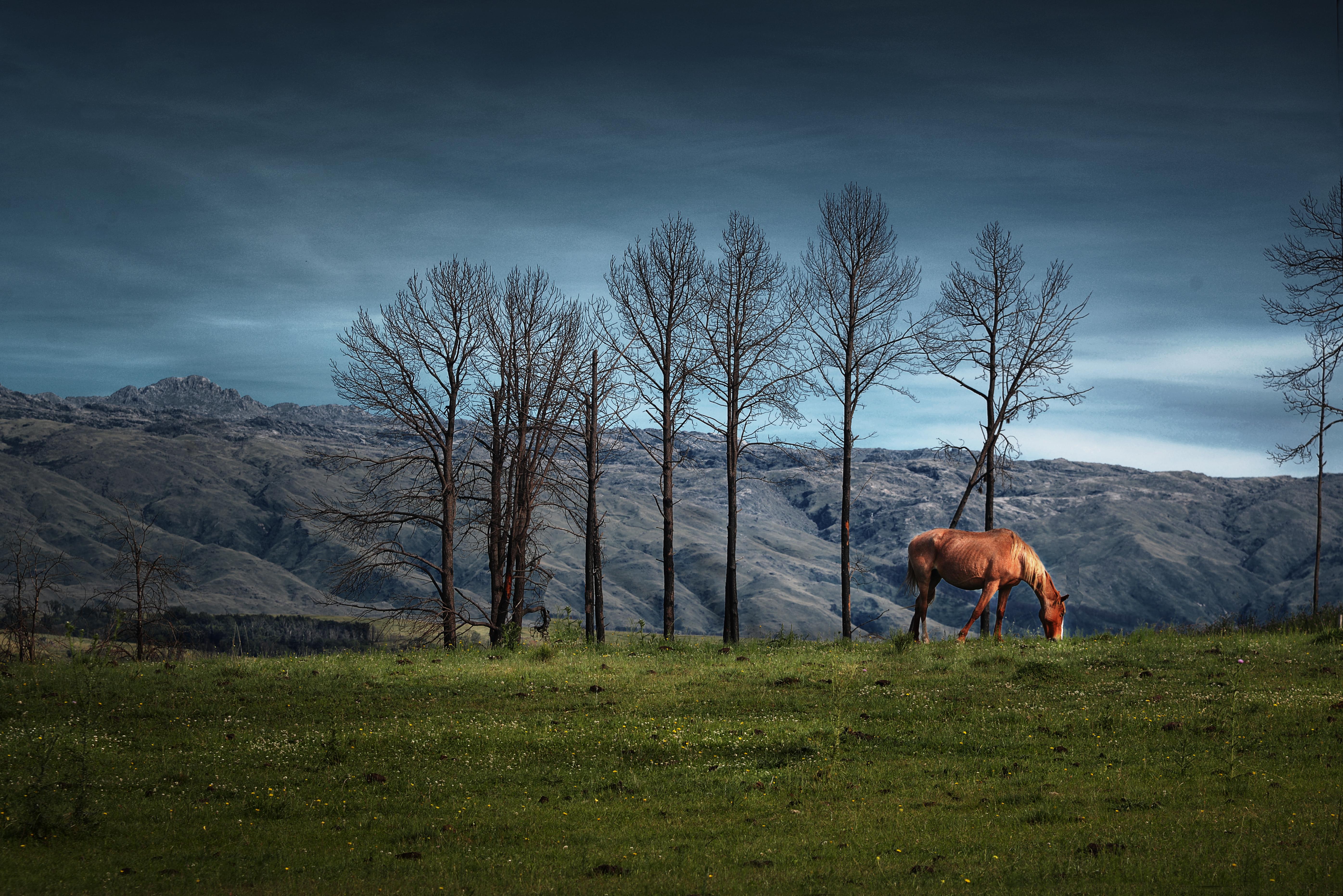 """""""El colorado pastando en las sierras de Yacanto"""" Sierras de Calamuchita, Córdoba, Argentina"""