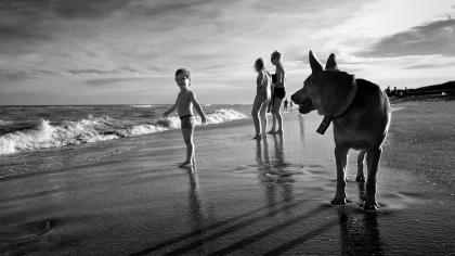 Niño perro y playa