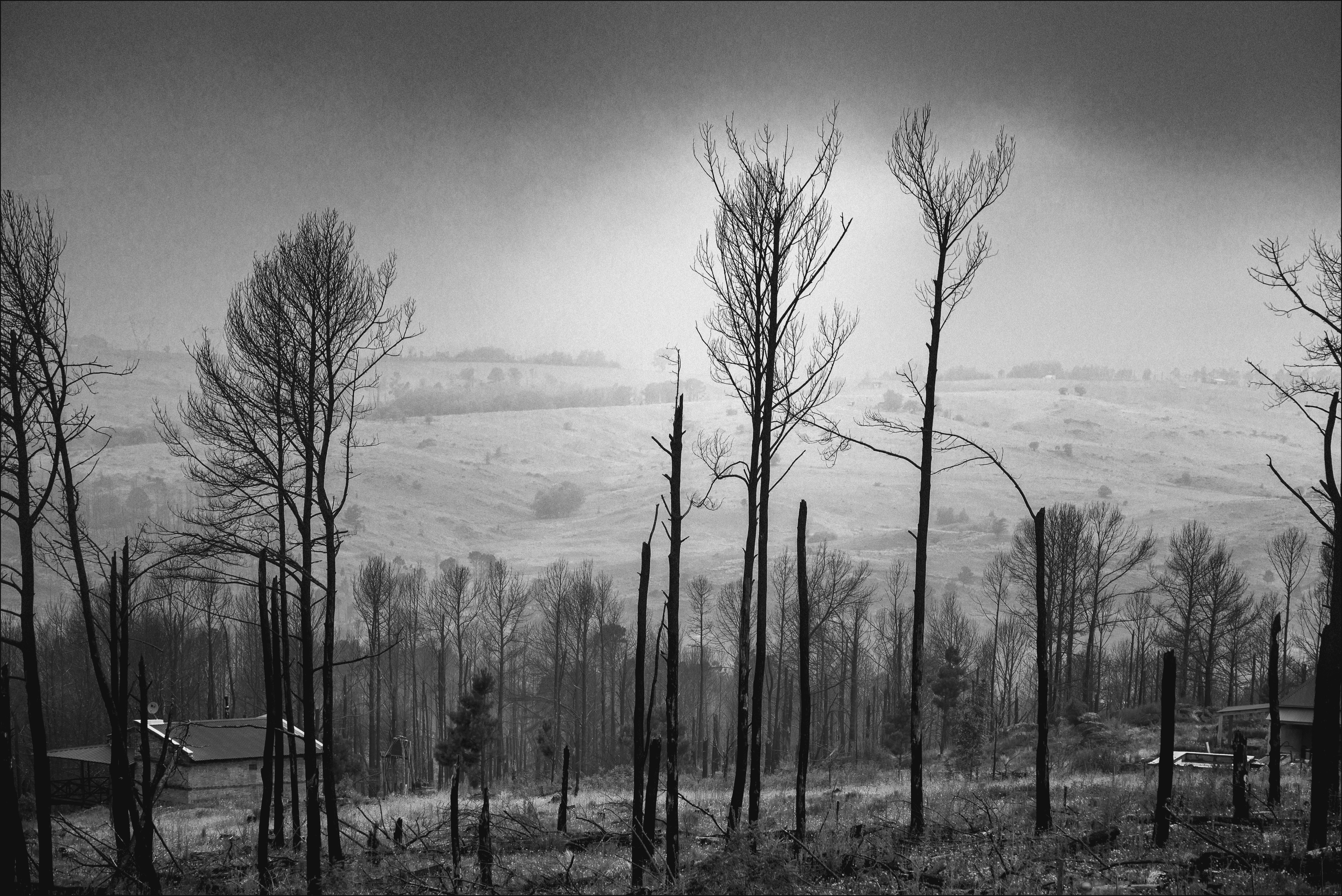 Niebla en el bosque quemado