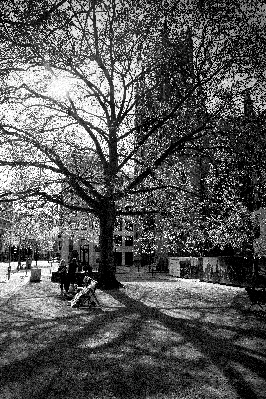 Charlando bajo el árbol, Berlín, Alemania. Abril 2018