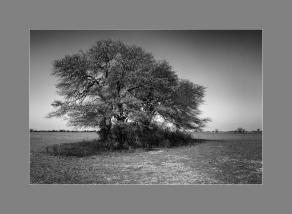 El árbol con marco gris