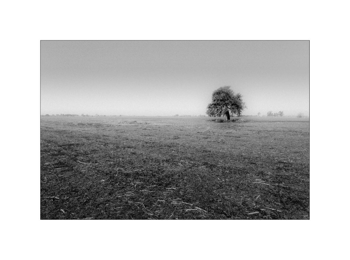 El árbol en la niebla